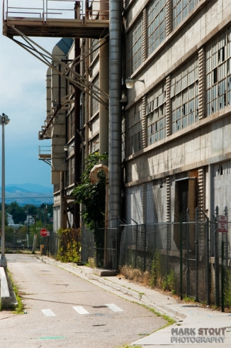 Gate Rubber Plant